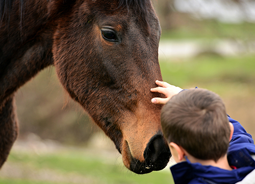 Terapia con caballos infanto-juvenil